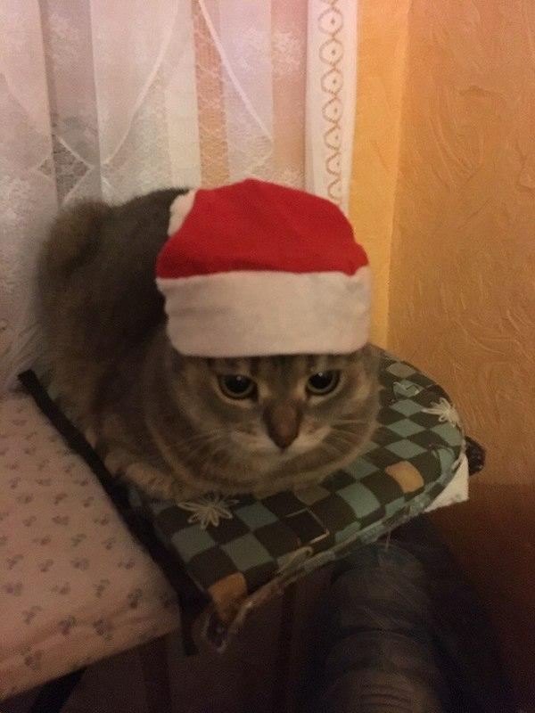 Музыка для Новогодней вечеринки :) Музыка, Новый Год, Кот