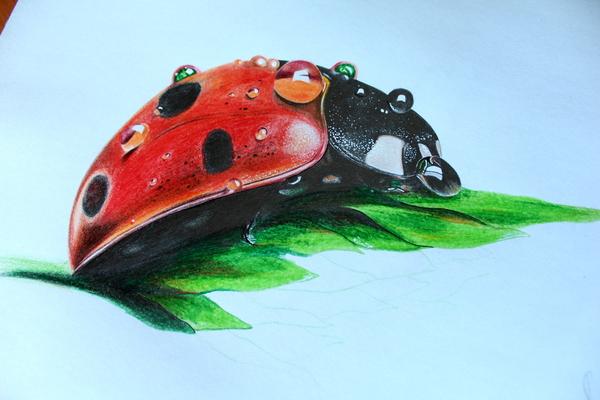 #sketch2 Sketchup, Эскиз, Тату, Арт, Божья коровка, Рисунок, Творчество