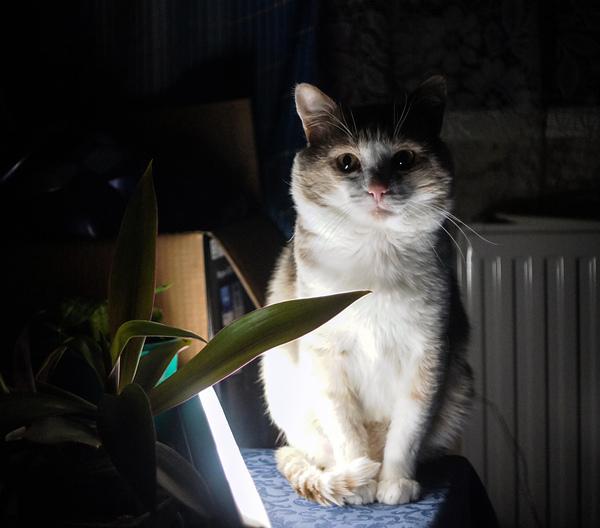 Кота назвали барсик