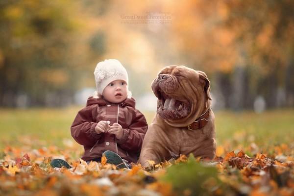 Маленькие дети и их большие собаки Энди Селиверстоф, Собака, дети, собаки и дети, фотография, длиннопост
