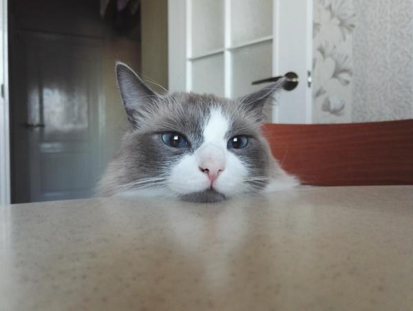 Эти глаза напротив :)