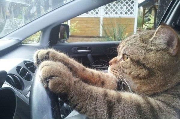cat twitter headers