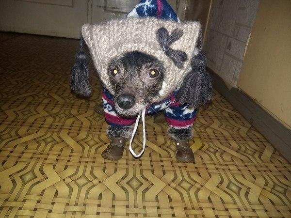 Когда -25, шерсти нет, а гулять хочется Мороз, Собака, Китайская хохлатая, Одежда для животных, Длиннопост