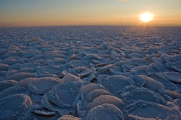 Блинчатый лёд блинчатый лед, Онежское озеро, Окрестности Петрозаводска, зима, лиса, Фото, Природа, пейзаж, длиннопост