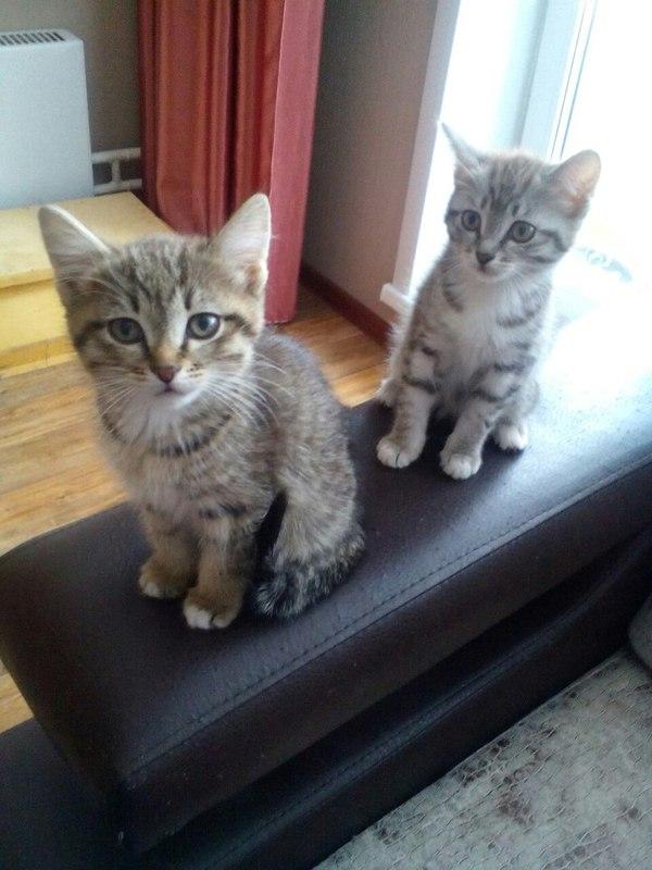 Отдам котят! кот, милота, длиннопост, помощь, в добрые руки, лига добра