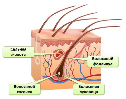 Волосы выпадают от тестостерона
