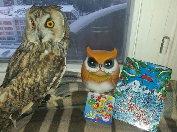 Анонимно-дедморозовский подарок анонимный Дед Мороз, Новый Год, обмен подарками