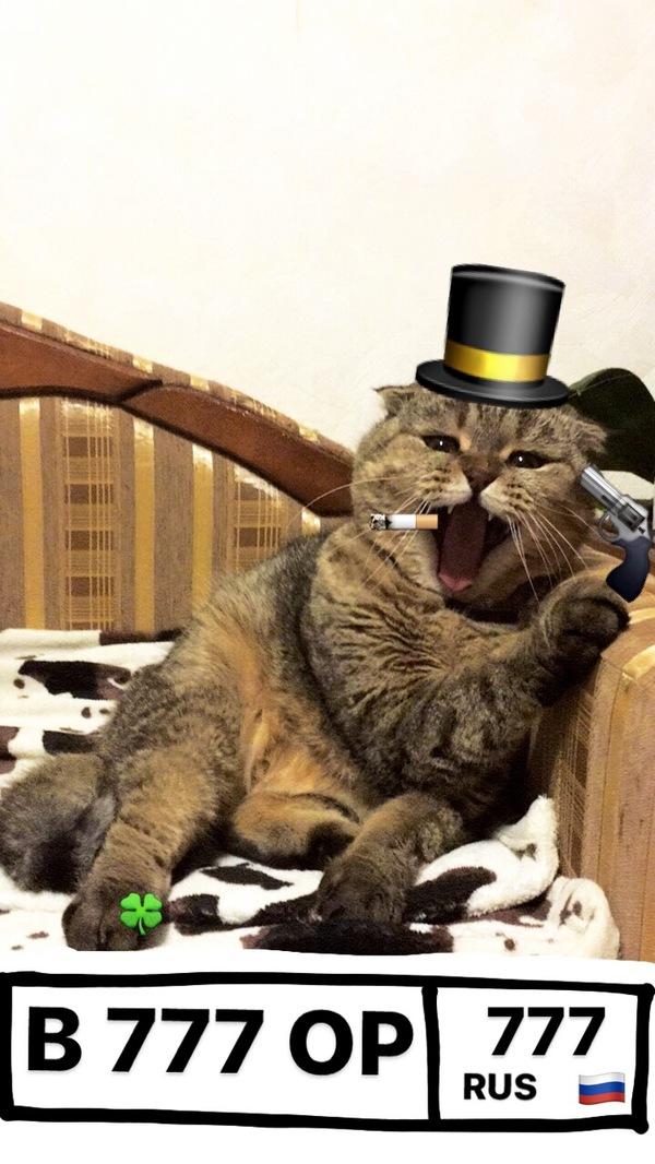Когда у твоего кота куча цып, а ты сидишь и кушаешь пельменчики