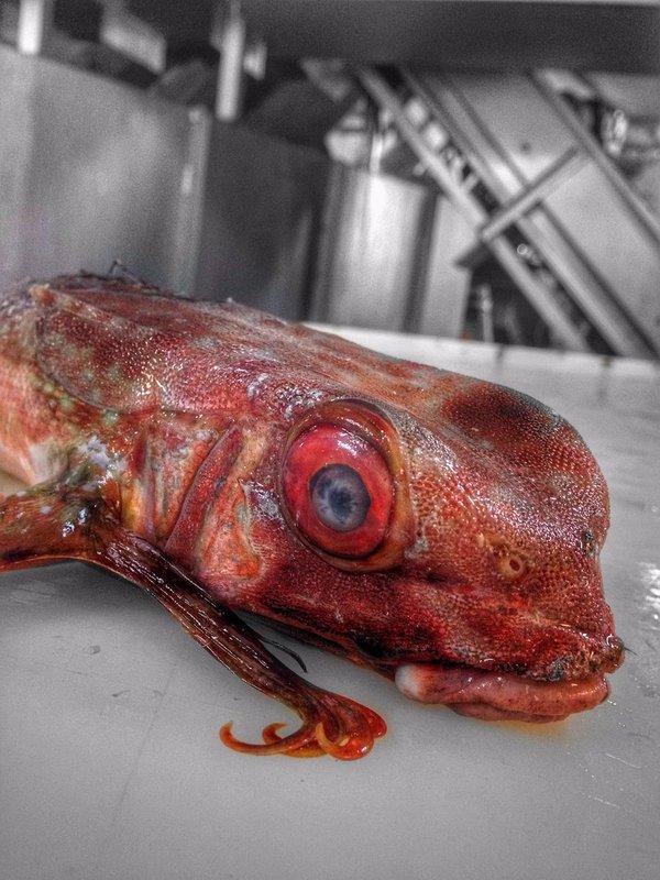 Иногда даже на совете моряков невозможно определить, то-что попало в сети траулера Рыба, море, еда, длиннопост
