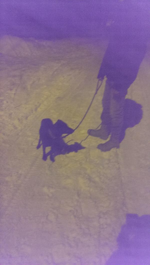 Найда - решили так назвать временного питомца. Собака, Николаев, Украина, судьба собаки, найденыш, Помощь, помощь животным, братья наши меньшие