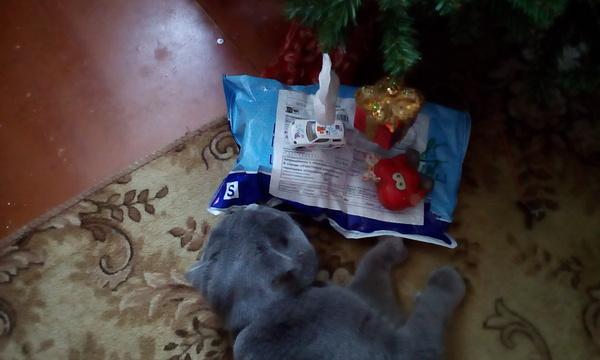 Новый год продолжается! Новогодний обмен подарками, Gepka, Длиннопост