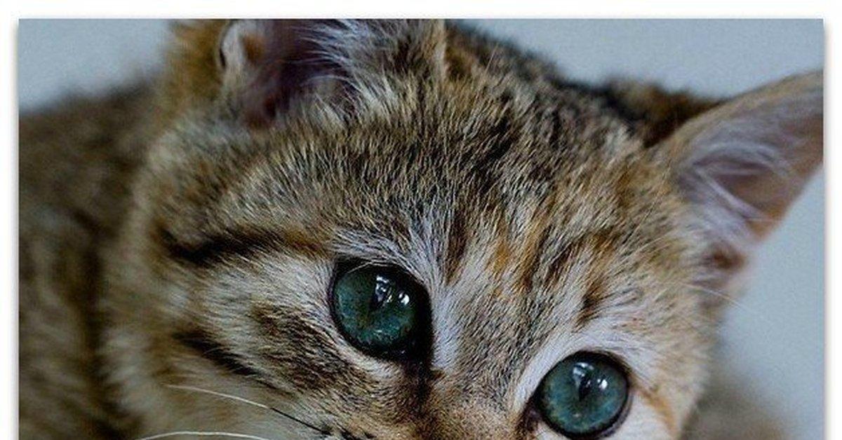 картинка с грустными глазами котенка два десятка лет