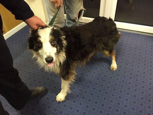 Невероятная история пропавшей собаки, в течение двух месяцев преодолевшей 80 км, чтобы найти свою хозяйку историясобаки, невероятноепутешествие, потеряшка, собака, длиннопост