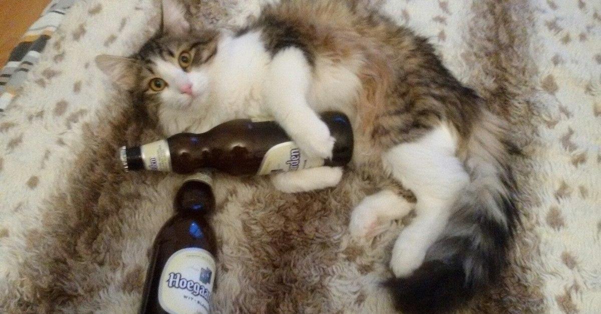 есть пьющий кот горе в семье картинка шинелях носятся такие