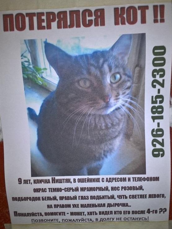 Где искать потерявшегося кота
