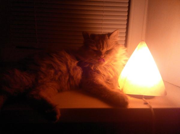 Мой котяра греется у лампы кот, кот с лампой