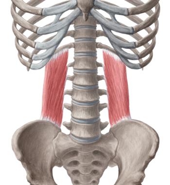 Болит спина от сидячей работы? боль, поясница, Гиперэкстензия, сидячая работа, упражнения, растяжка, тренер, длиннопост