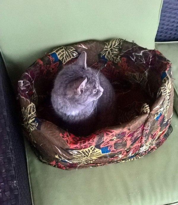 Москва. Кот ищет дом. В добрые руки, Помощь животным, Кот, Москва, Заберите кота, Длиннопост, Помощь