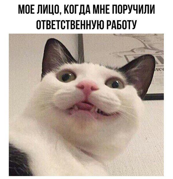 Мое лицо...