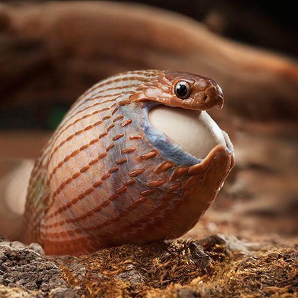 Довольная змея возвращается от бабули