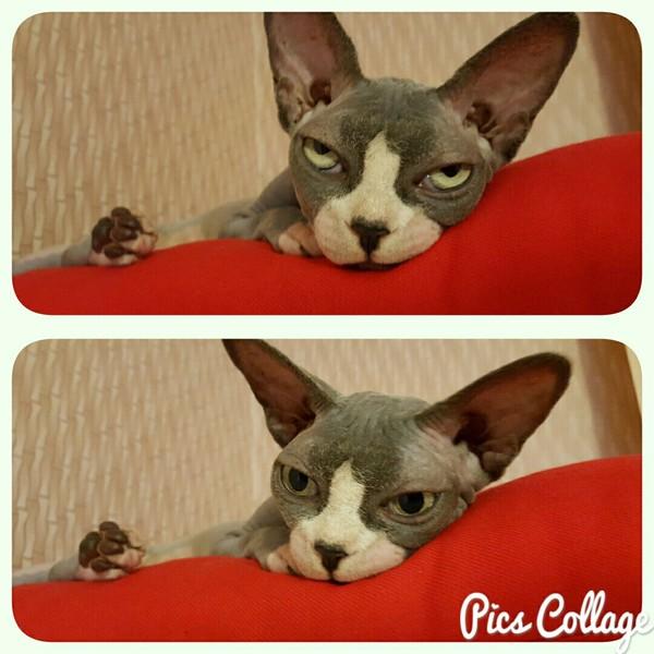 Когда осознал, что новогодние праздники прошли и единственная радость - выходные... Кот, Грусть, Праздники