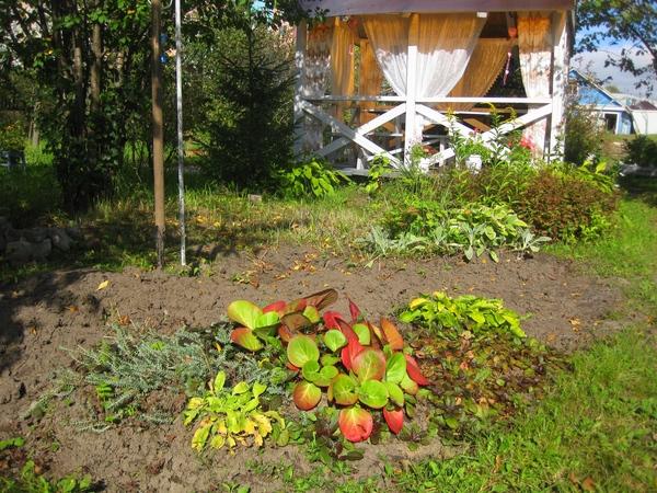 Как я делала прудик в своем саду. Садовый, Прудик, Своими руками, Длиннопост