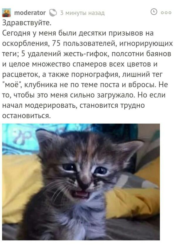 Модератор тоже может в отсылки Комментарии, модератор, отсылка, страх и ненависть в лас вегасе, кот