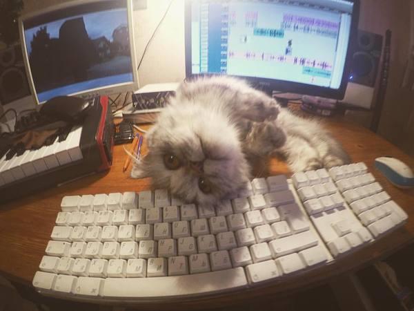 Хватит монтировать и дай мне еды Кот, Голод, Pro tools
