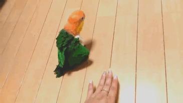 Танцуй птичка танцуй
