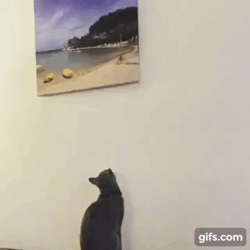 Кривовато. Видео, Гифка, Кот, Картина, Животные, Питомец, Криво