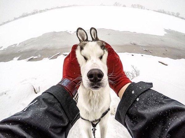 Маскировка Собака, Заяц, Хаски