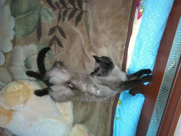 Скажите, что не так с этим котом? Кот, Поломка, Странности, Сон