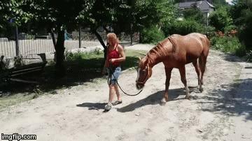Здоровая лошадь и больная лошадь Кони, Лошади, Болезнь, Здоровье, Видео, Гифка, Длиннопост