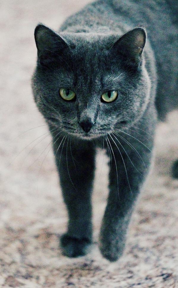 Пикабушники Томска, выручайте! Томск, Кот, Помощь, В добрые руки, домашние животные