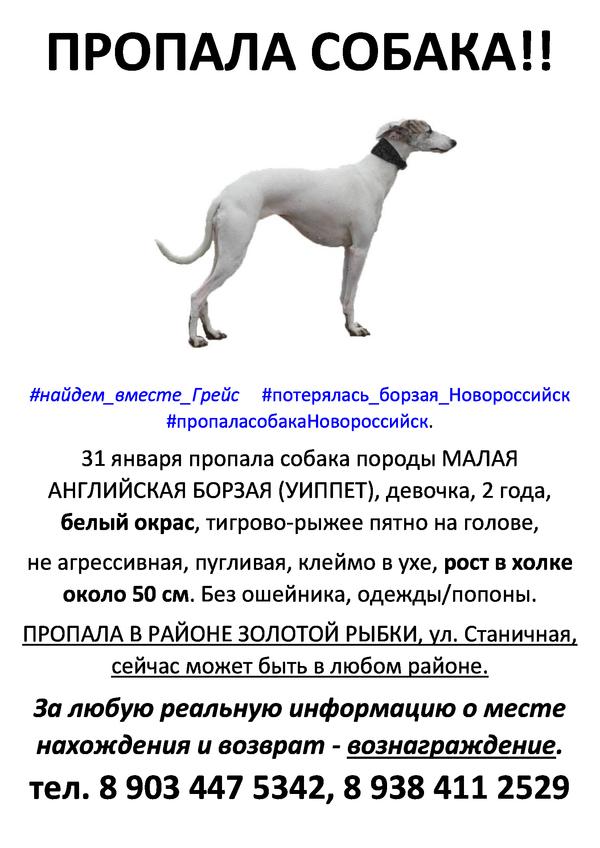 Новороссийск. Пропала собака Пропажа, Собака, Помощь, Новороссийск