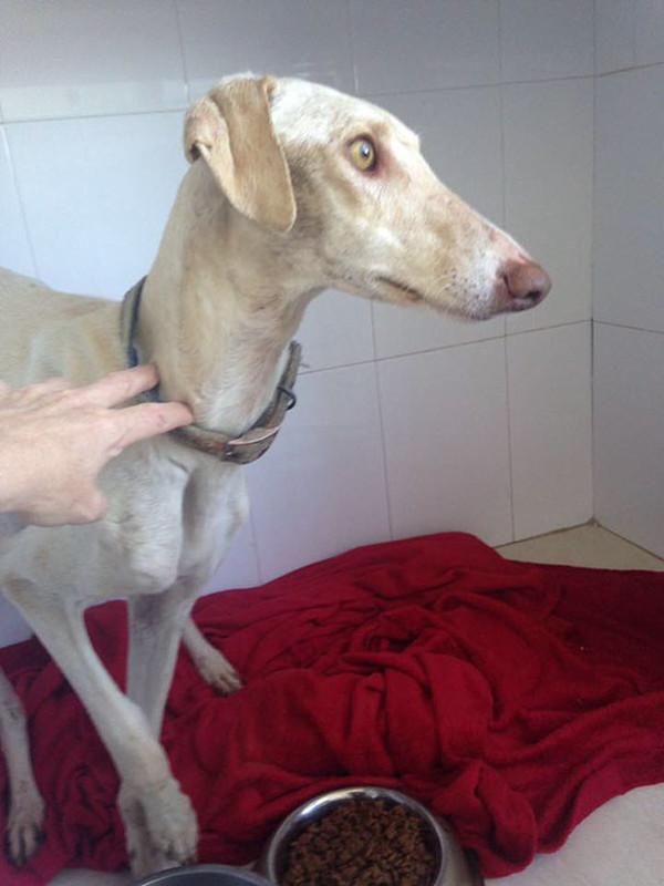 Собака со сломанными лапами привела ветеринара к своим щенкам Природа, Собака, Невероятно, Умница, Длиннопост
