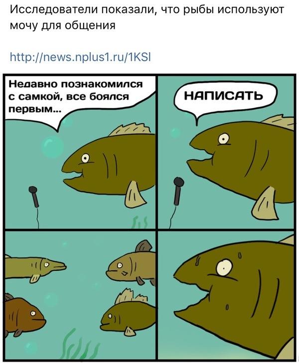 Пикчер как всегда на высоте Образовач, ВКонтакте, Рыба, Интересное
