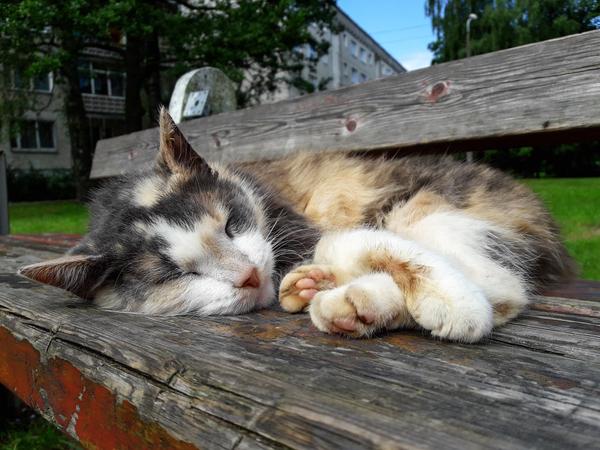 Охотник на котиков #2 Кот, Сон, Лето, Трехцветная кошка, Скамека, Каджит