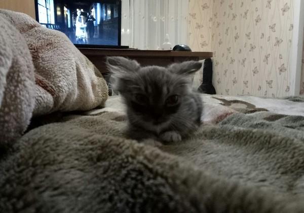 Кот Карл! кот, кошки и котята, карл, питомец, длиннопост