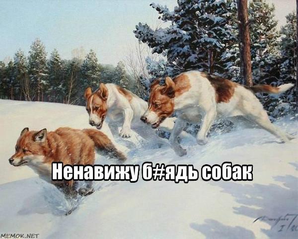Почему маленькие собаки такие злые? Нападение собак, Собака, Путь отступления, Паркур, Длиннопост