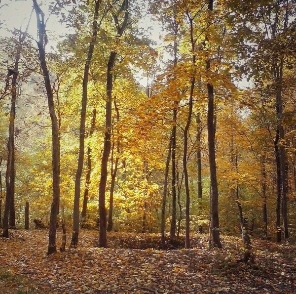 Лесная тишина. лес, фотография, лесной пейзаж, деревья, Не судите строго