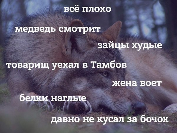 https://cs9.pikabu.ru/post_img/2017/02/09/6/1486630858136821438.jpg