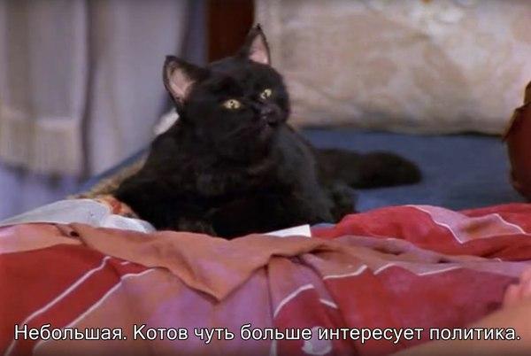 Говорящий кот мем