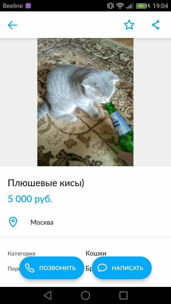 Объявления бывают разные) Кот, Алкоголик, Горе в семье