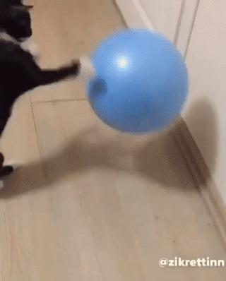 Когда у тебя есть мячик