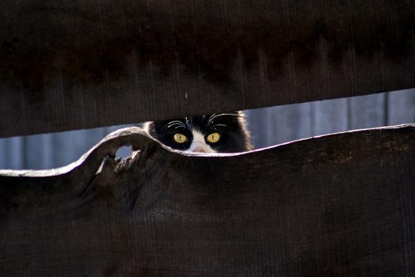 РосКотНадзор Кот, Питомец, Не животное, Котейка-Красотка, Наблюдатели, Скрытый
