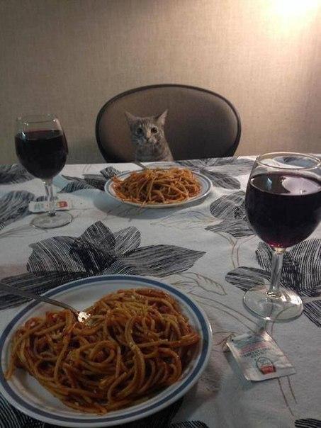 Романтический ужин с котом Романтический ужин, Ужин с котом, Полимерная глина, День святого Валентина, Спагетти, Кот, Лепка