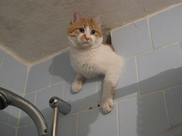 Вентиляционный кот кот, внезапно, сюрпрайзмазафака