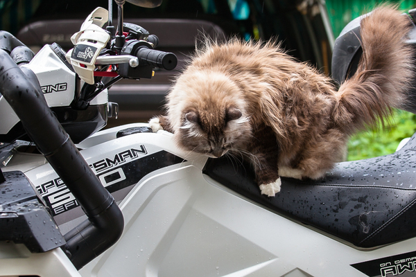 Хозяин, квадроцикл помыт! Вкусняшки то будут? :) кот, квадроцикл, юмор, не мое, Сергей Кобах, длиннопост