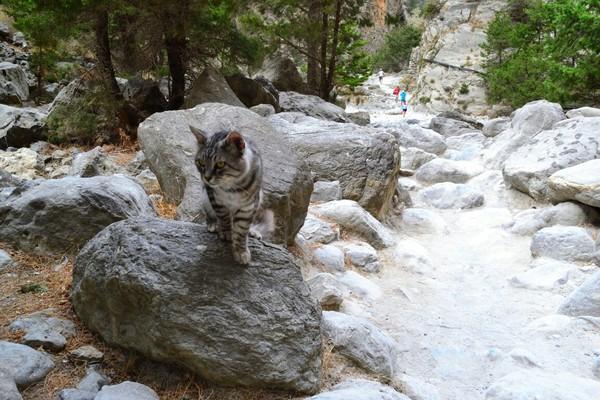 Греческие коты Греция, Кот, Остров Крит